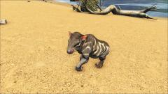 The Babies of ARK