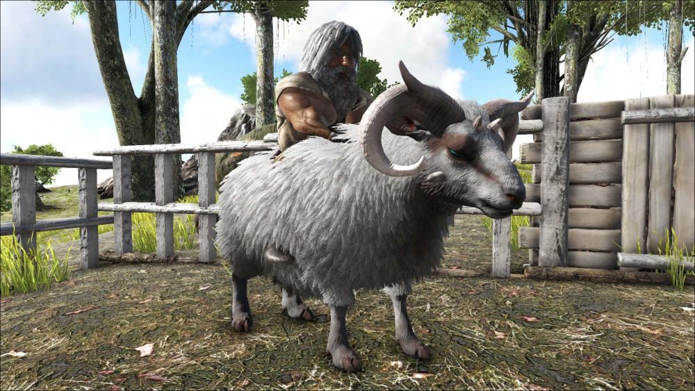 Sheep_aint_happy.jpg