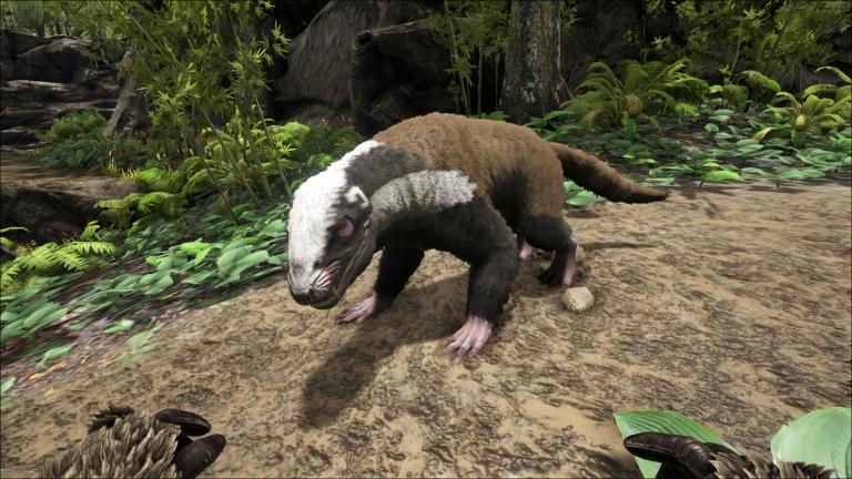 Badger Purlovia