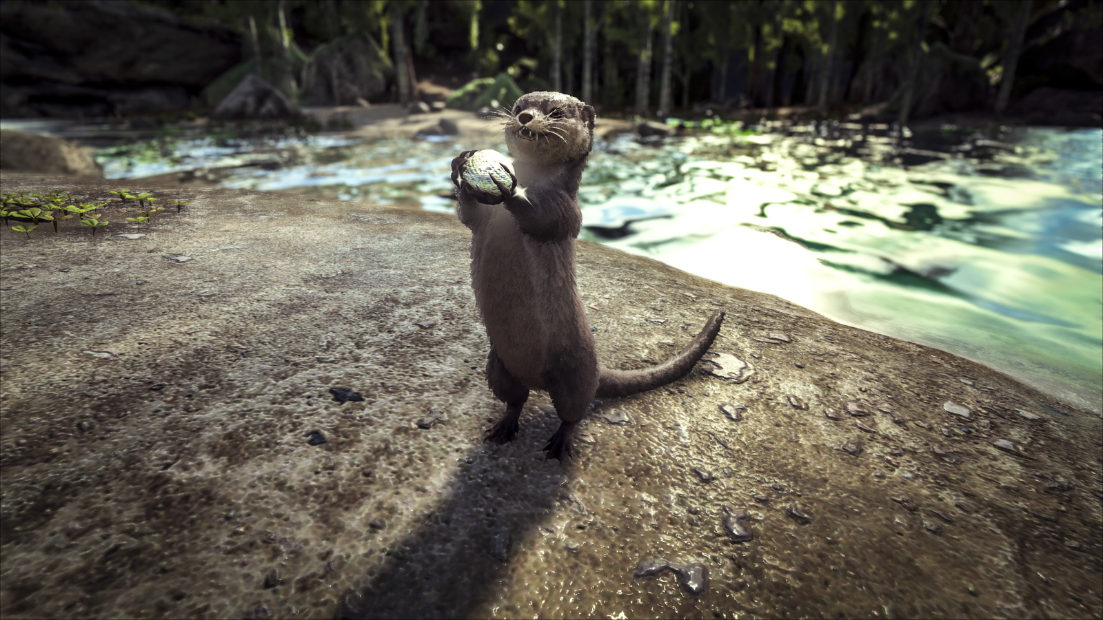 large.Otter_1.png