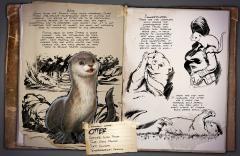 Dossier: Otter
