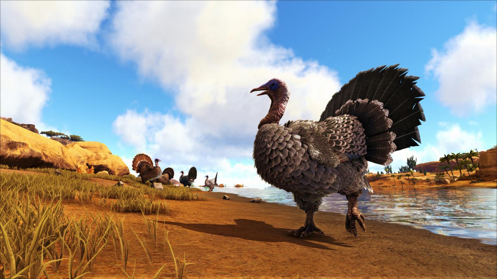 large.5a220b47a1be6_BlueDragon-TurkeyLife.jpg