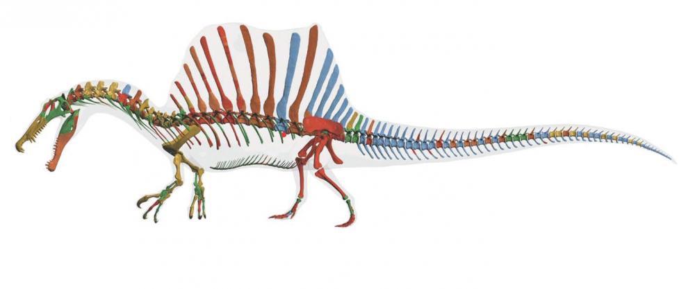 spinosaurus-reconstruction.jpg