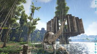 Did You Know Ragnarok Jungle Platform And Sap Trees General