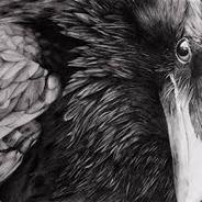 Raven1995