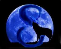 Bluemoon Syndicate