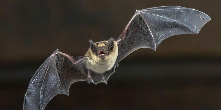 bat-1280x480-760x380.jpg