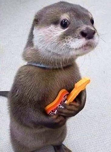 Otter-with-guitar-meme.jpg