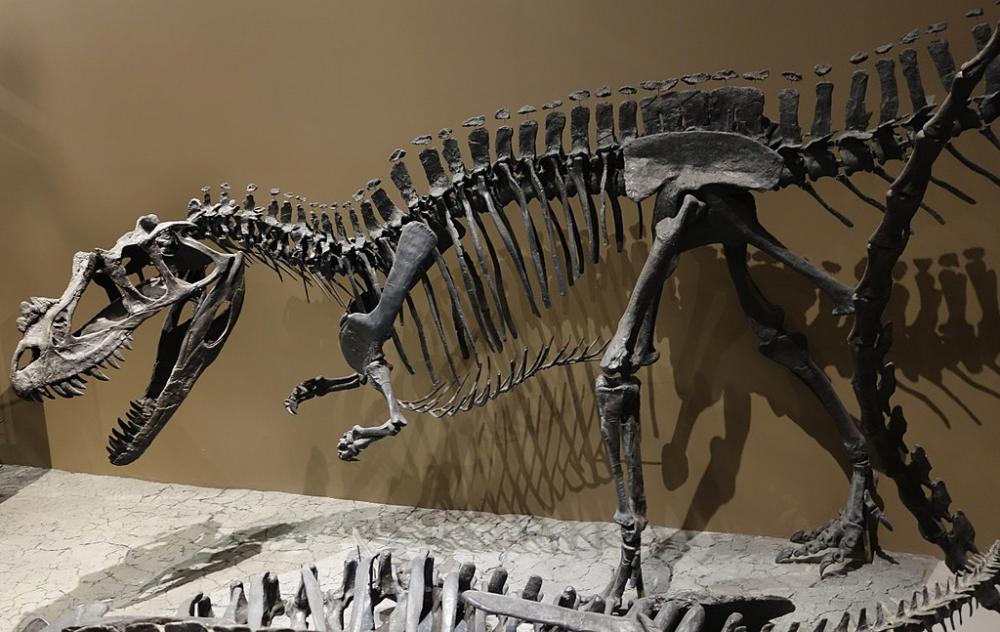 1024px-Ceratosaurus_mount_utah_museum_1.jpg