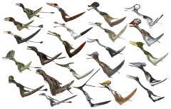 Pterosaur-diversity-low-res.jpg